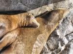 Snuggling Seals Wallpaper 1280 x 960