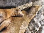 Snuggling Seals Wallpaper 1600 x 1200